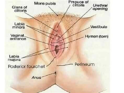 With pleasure a view of whole sexual anatomy for every jpg 480x360
